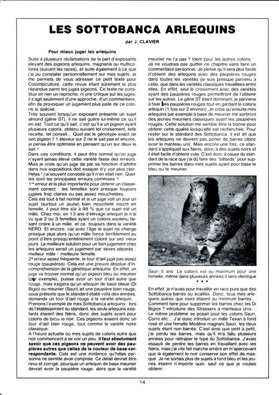 Article les sottobanca arlequins Colombiculture n°67 mars 1990-1 Par Jean Clavier
