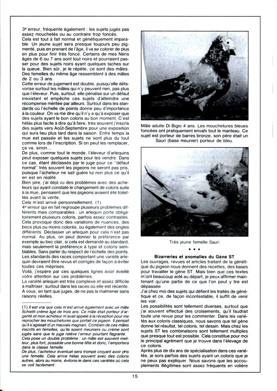 Article les sottobanca arlequins Colombiculture n°67 mars 1990-2 Par Jean Clavier