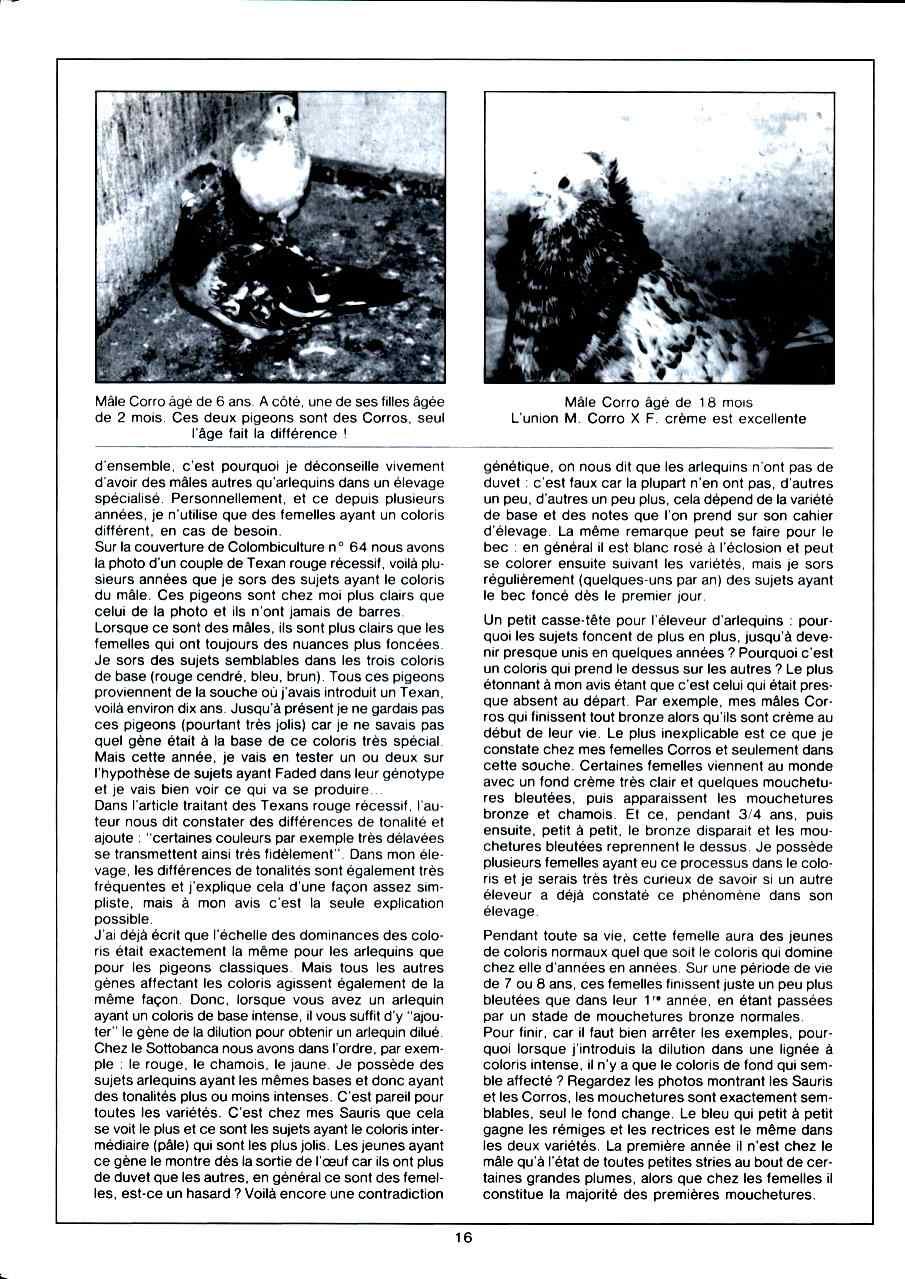 Article les sottobanca arlequins Colombiculture n°67 mars 1990-3 Par Jean Clavier