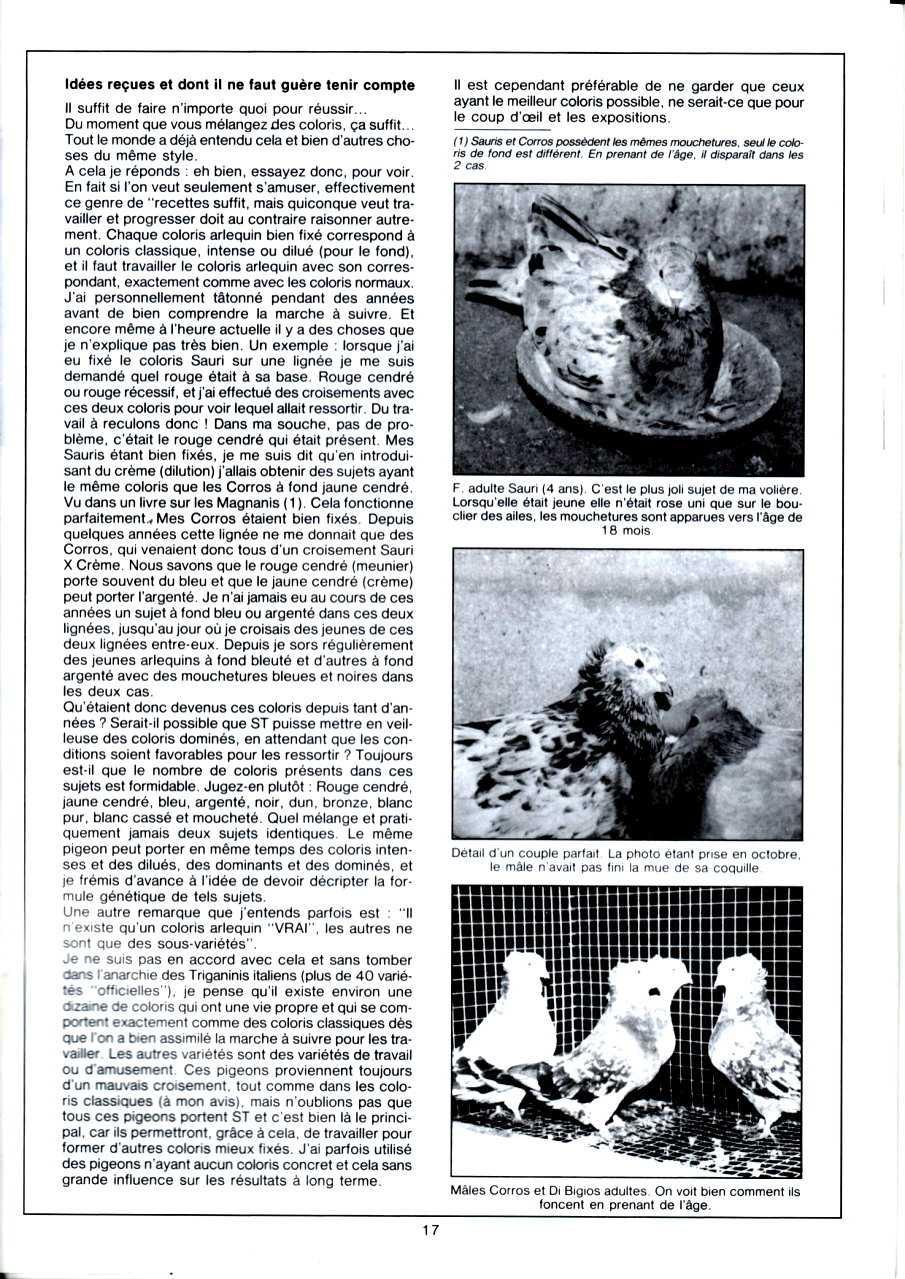 Article les sottobanca arlequins Colombiculture n°67 mars 1990-4 Par Jean Clavier