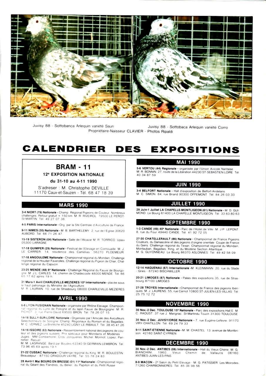 Article les sottobanca arlequins Colombiculture n°67 mars 1990-5 Par Jean Clavier