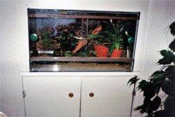 Le terrarium des mantellas